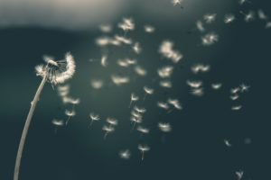 Seasonal Allergies Getting You? 7 Solutions to Keep Allergens Out of Your Home